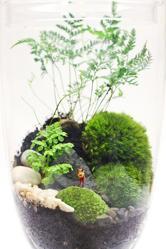 Forest scene in tall apothecary jar. So many ideas for creating your own terrarium.