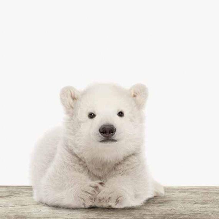 Ein verträumter Eisbär passt in jeden Raum. Wähle für dieses Motiv dein Lieblingsmaterial!