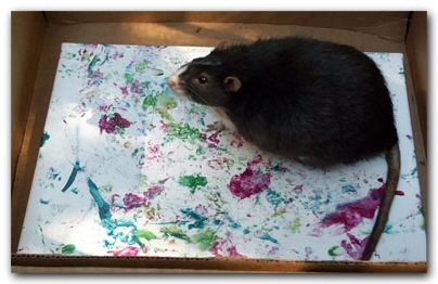 "Paw Painting ""Joyous Spring"" by Rat artist Cricket. ratbehavior.org/PawPaintingRats.htm"