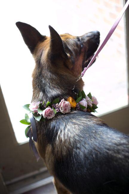 Fresh floral dog collar for wedding dog best man ring bearer dog collar pink spray roses orange ranunculus German Shepherd  ---- Adorable!!