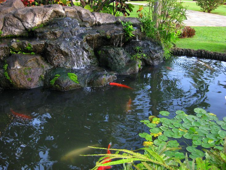 17 best images about new japanese waterfall garden on for Koi pond shapes