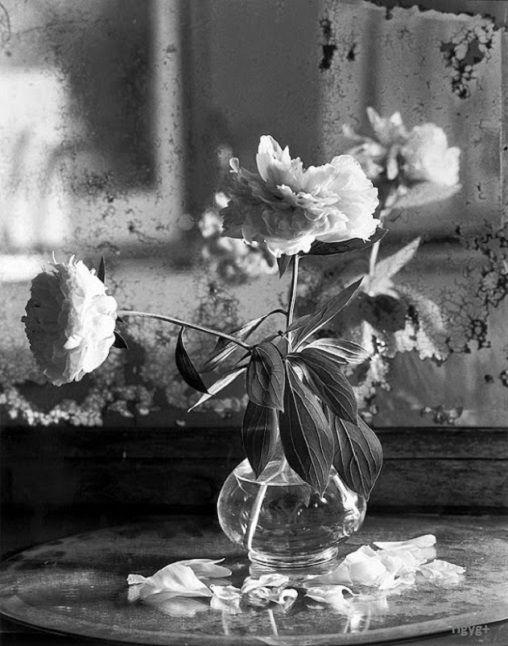 Still life photography. Ez a megfestetlen csendélet ugyanolyan csendet teremt az életben, mintha festmény lenne… Benne van a csendéletek arisztokratikus higgadtsága, kiszámíthatatlansága, és egy csipetnyi lomhasággal álcázott élénk frissesség. Az elrendezett kuszaság meghozza – itt a fényképen is – a minden a helyén van érzést és ugyanúgy belerángat a csendélet intimitásába, mintha festmény lenne… Fényképezzünk több csendéletet! - Németh György