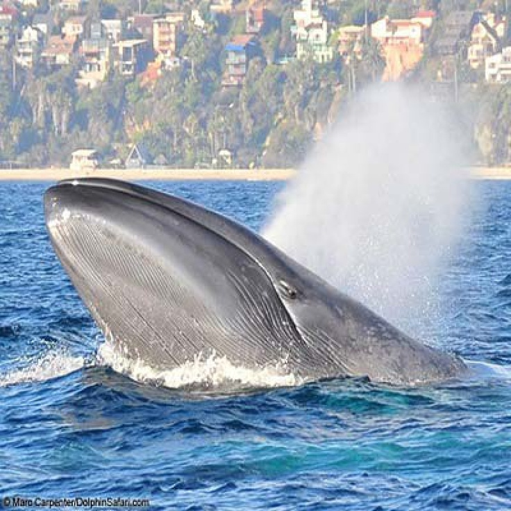 Coupons dana point whale watching