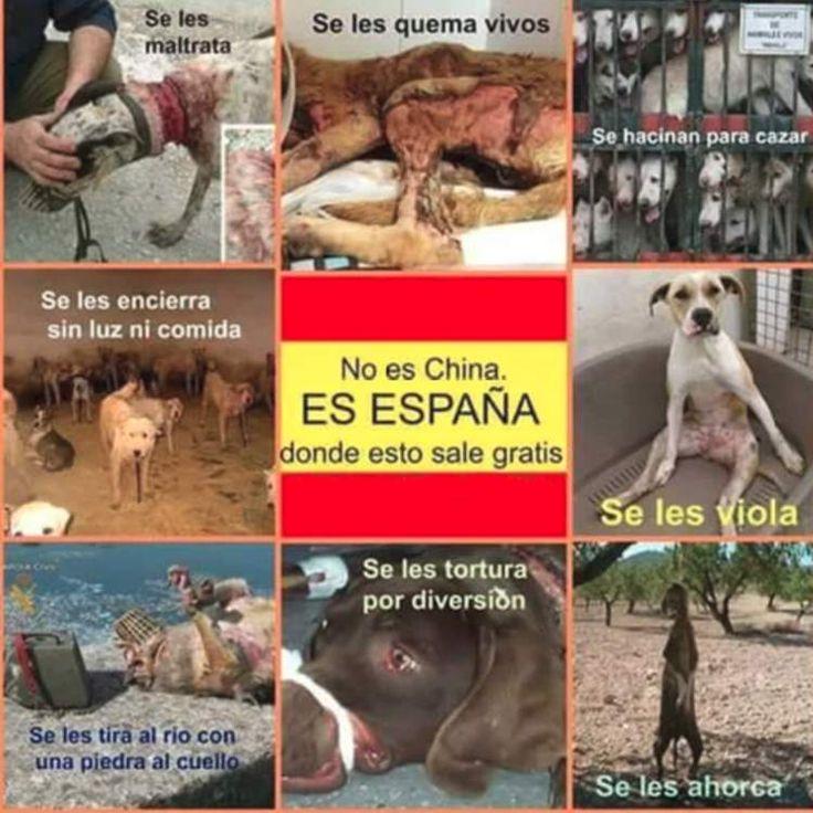 No es China, es España donde el maltrato animal sale gratis: #españa #spain #madrid #barcelona #maltratoanimal #maltrato #perro #perros #galgo #galgos #china #animales #animal #mascota #mascotas #denuncia #dog #dogs #pet #pets #boxer #pitbull #eeuu #foto #fotos #photo #photos