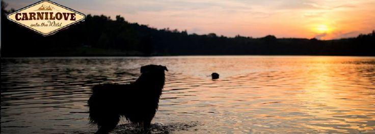 Hund - Mat - Carnilove - Tropehagen