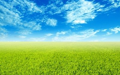 Green field wallpaper