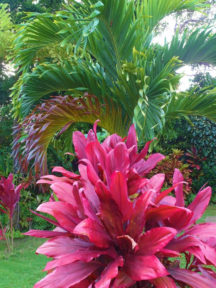 Beautiful Hawaiian shrub plants | trinity by the sea