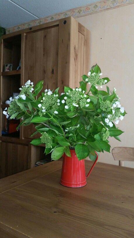 Hortensia uit eigen tuin