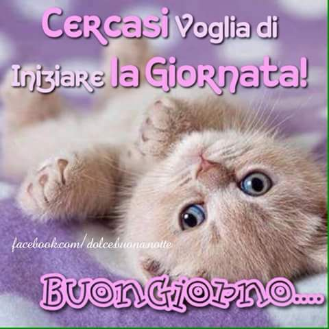 144 best images about frasi occasioni on pinterest for Immagini buongiorno gratis divertenti