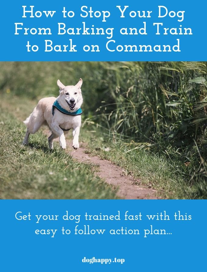 Your Dog Will Not Understand What To Do Without Your Assistance