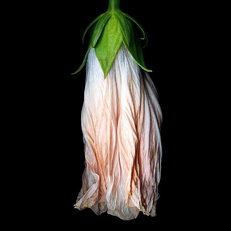 petticoats by kate scottScott Photography, Wix Com Kate, L'Wren Scott, Art Photography, Beautiful, Photography Create, Bloom, Flower, Kate Scott