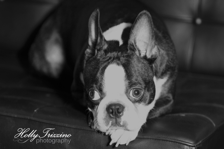 My Sweet Schatzie Just Love My Granddogs Pet Photo By Holly Trizzino Photography Animal Photo Animals Pets