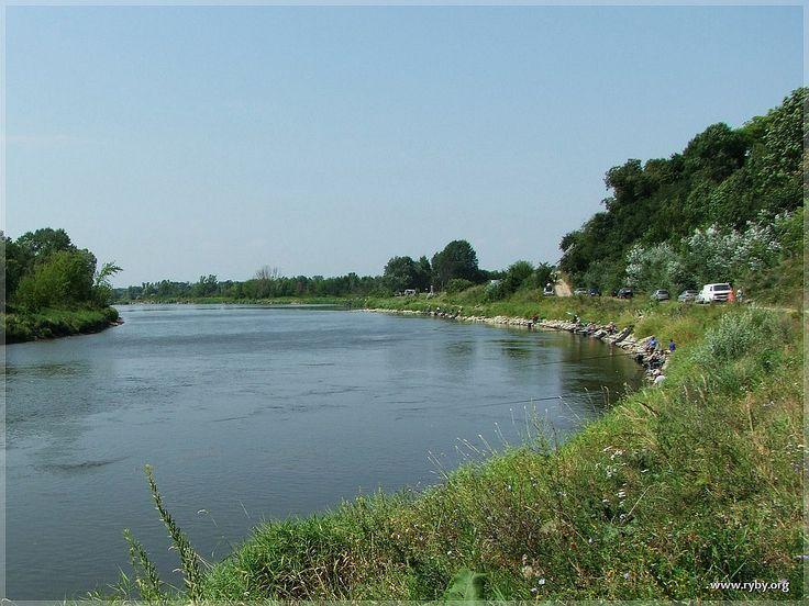Rzeka Bug w Drohiczynie