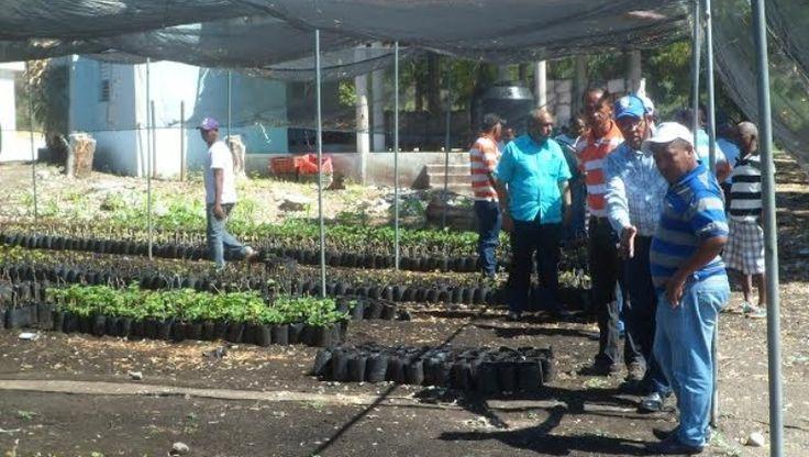Ministerio Agricultura E INUVA Realizan Levantamiento En Zonas De Cultivo De Uva