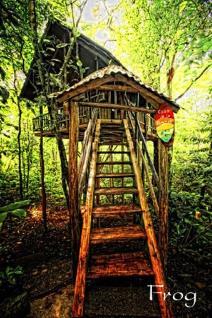 10 best paradis tropicaux images on pinterest for Tree house costa rica