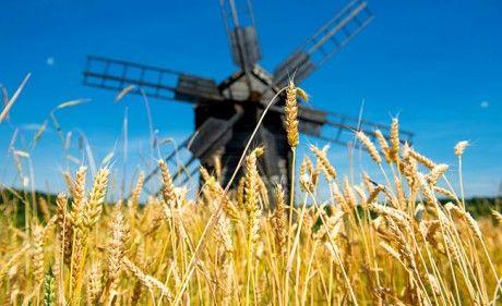 Urgetreide gesünder als moderne Getreidesorten