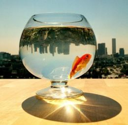 fishbowl centerpiece? kiiinda love this idea for beach wedding