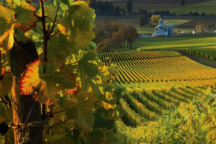 Stoller Vineyards in the Dundee Hills, the heart of Oregon wine country and one of my favorite wineries.