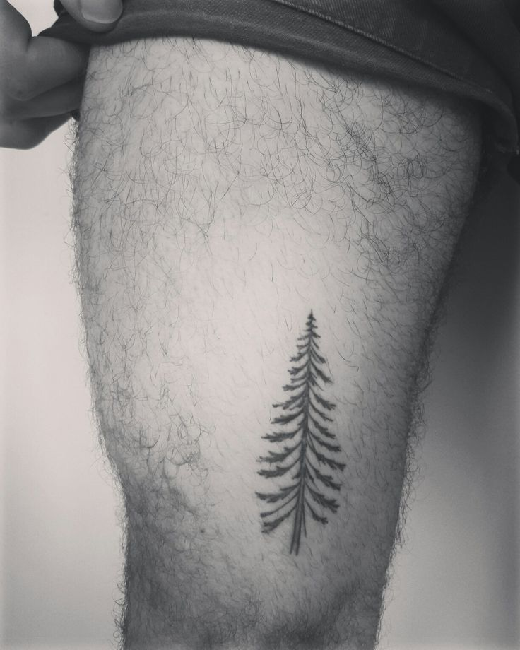 small tattoo leg pine tree tatouage sapin homme cuisse jambe tattoo pinterest sapin. Black Bedroom Furniture Sets. Home Design Ideas