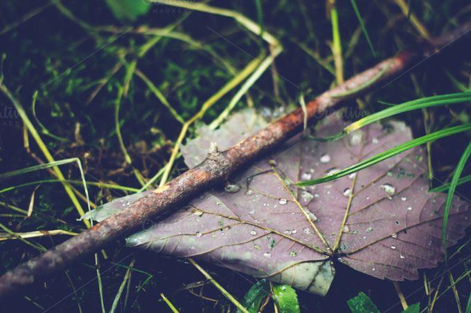 Raindrop Leaf by Amber Ryan Photo on Creative Market