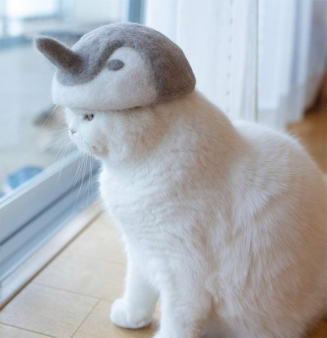 Cats Wearing Hats Made From Their Own Hair In 2020 Cat Care Cute Cats Cat Hat