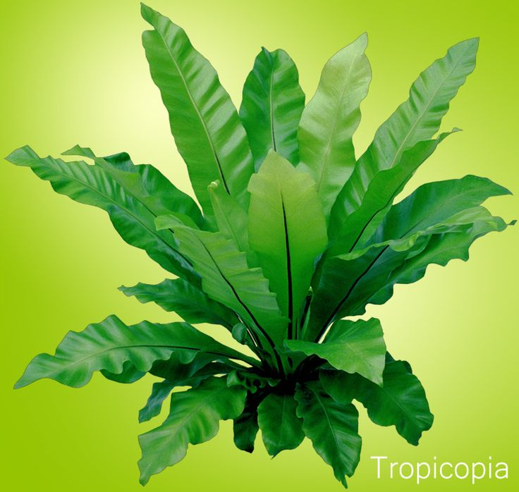 8 best house plants for cold rooms images on pinterest for Plants that need little care