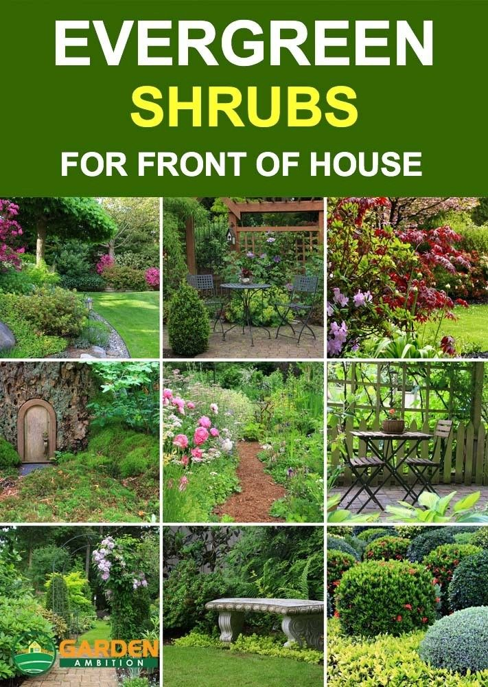 Best Evergreen Shrubs For Front Of House How To Choose The Best