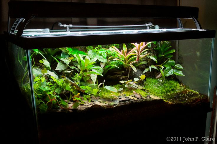 10 gallon fish tank vertical conversion 2017 - Fish Tank ... 10 Gallon Vivarium