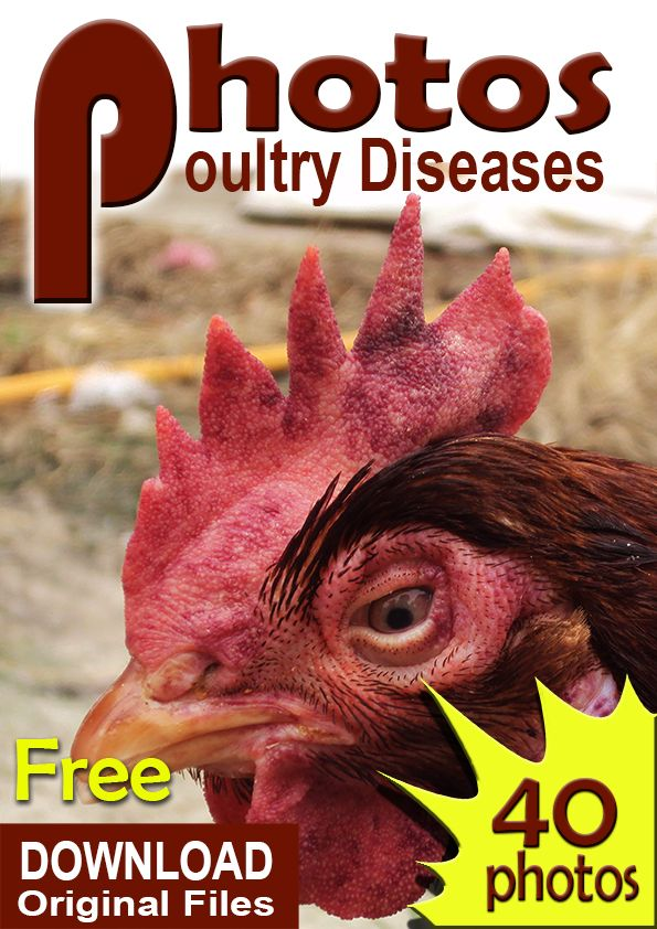 Downlaod link. please share. https://drive.google.com/file/d/0B4IgyykE0nFaVGt5NzNqSWhpRDQ/view?usp=sharing  poultry diseases pictures, photos, symptoms