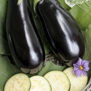 Gemengde groenteschotel met paprika, courgette en aubergine