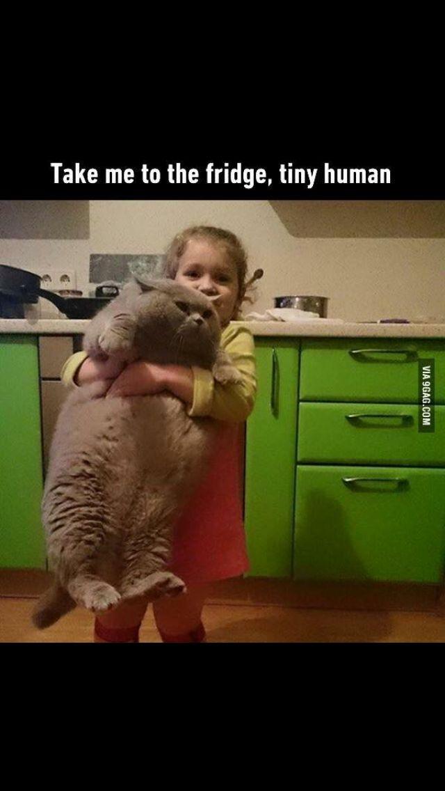 Fattest cat ever!