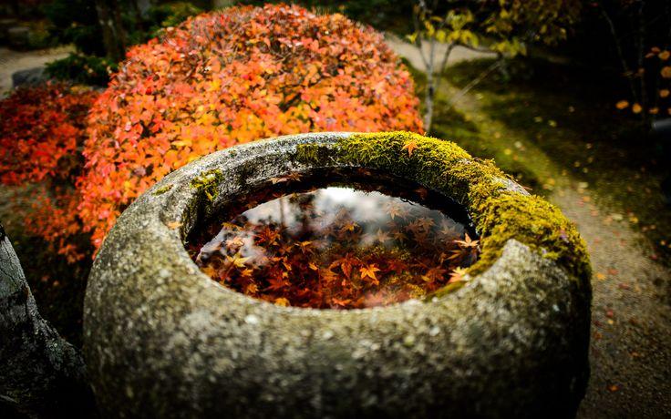 jikkouin temple, kyoto 実光院 京都