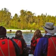 Bear viewing tours in Bella Coola.