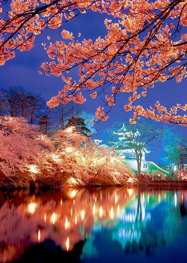 Sakura Cherry Blossoms at Takada Castle (Jōetsu-city, Japan) 高田城の桜