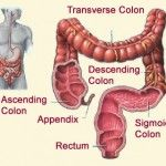 Top 11 Colon Cleansing Herbs - How To Clean Colon With Herbs | Search Herbal Remedy