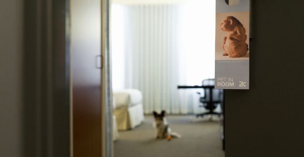 21c Louisville is a pet friendly hotel.    #papillon