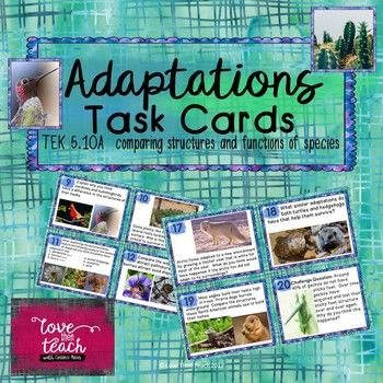 This file includes 20 physical adaptation task cards. Most cards focus on comparing structures and functions of two animals or plants. These versatile task cards can be used in a game of SCOOT, stations, small groups, or with early finishers. These are not multiple choice task cards, so they might take students about 30-45 minutes to complete all 20 cards.
