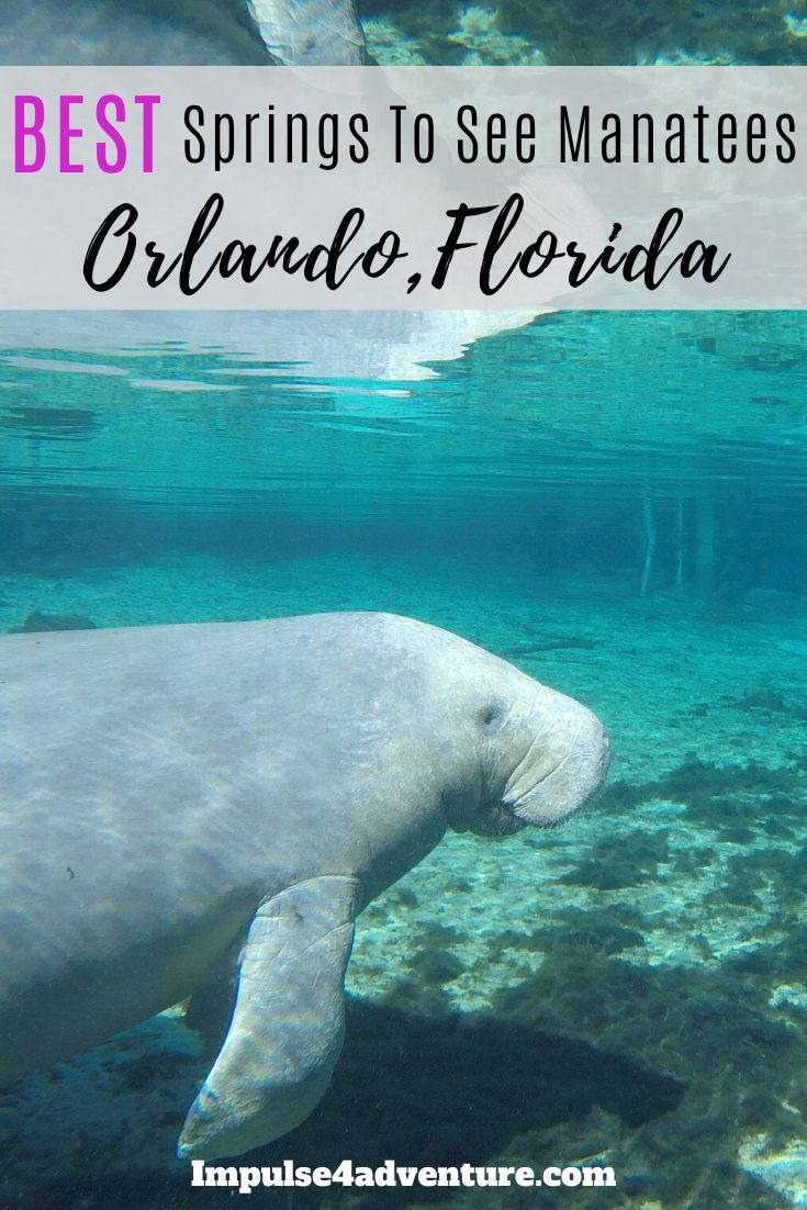 5 Best Places To See Manatees In Florida This Winter Blue Springs State Park Manatee Florida