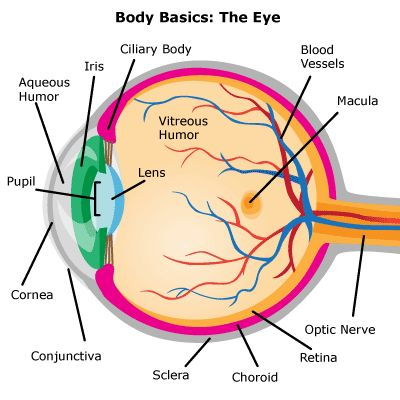 14 best Eye Diagrams images on Pinterest
