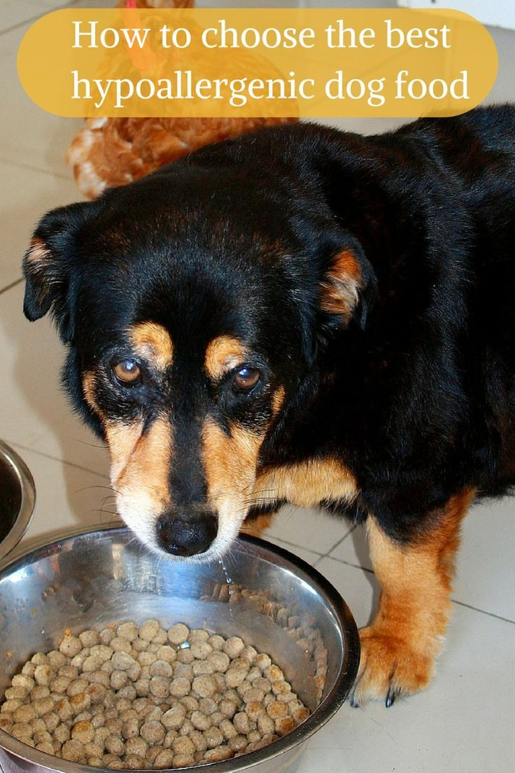 Top Five Foods For Dogs With Allergies