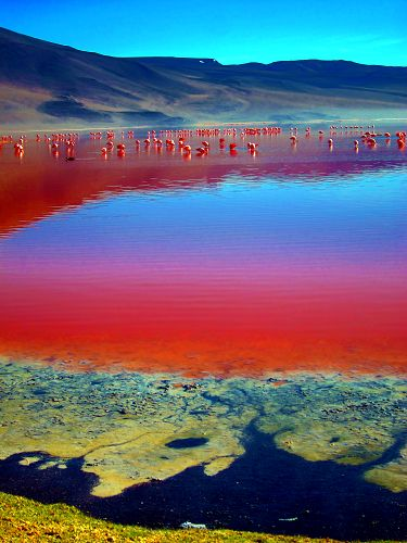 Day 42-44: Laguna Colorada, Potosi, Bolivia. We will also be seeing this amazing beauty!