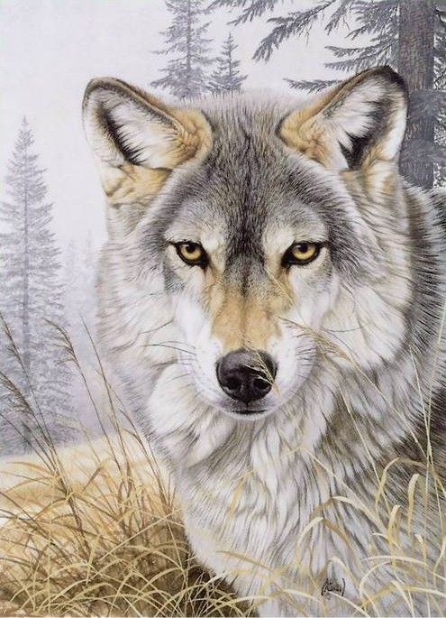 """ The wolf is the most charismatic and controversial of the large predators living in Europe today ; few animals have had such a powerful influence on our imaginations, or have been so feared and misunderstood ."" wolvesandhumans,org Al Agnew art licensor. ...."