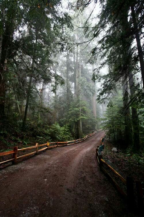 Forest road, Vancouver, British Columbia