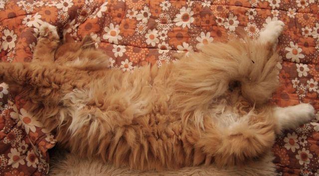 Sleepy hairy thing