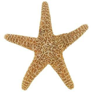 Us Shell Large Sugar Starfish Shop Hobby Lobby