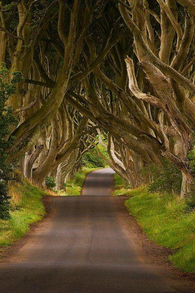 The Dark Hedges ~ Ireland