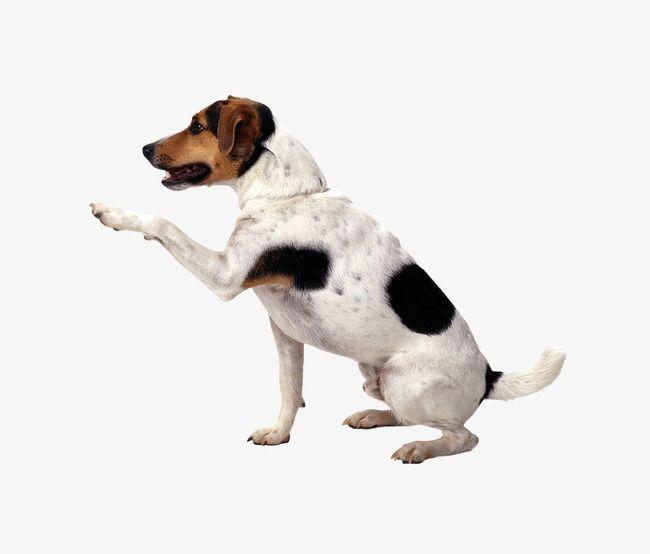 Handshake Puppy In 2020 Dog Background Studio Background Images