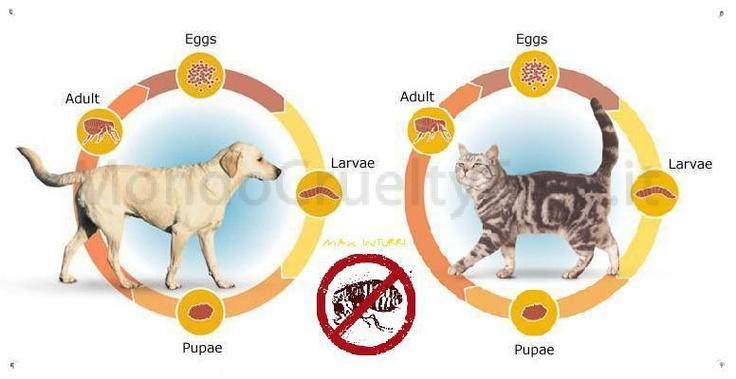 http://mondocrueltyfree.it/i-10-rimedi-naturali-per-proteggere-cane-e-gatto-dalle-pulci/