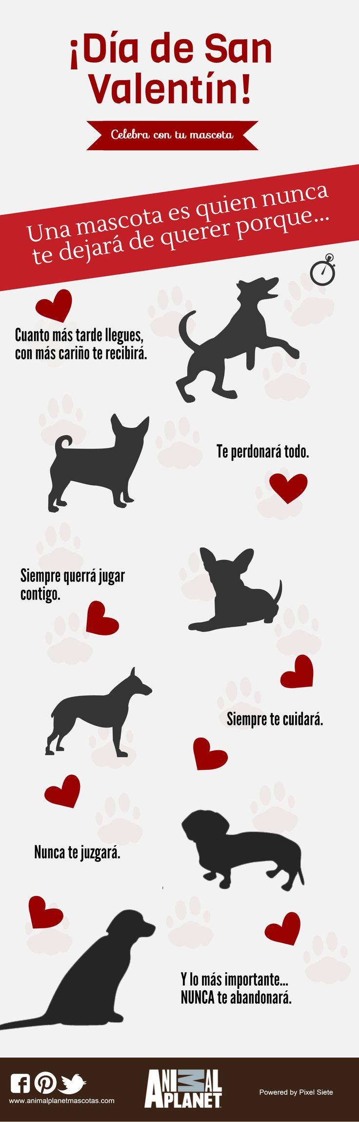 Hasta que no hayas amado a un animal, una parte de tu alma permanecerá dormida. Feliz día de San Valentín  #AnimalPlanet #AnimalPlanetMascotas