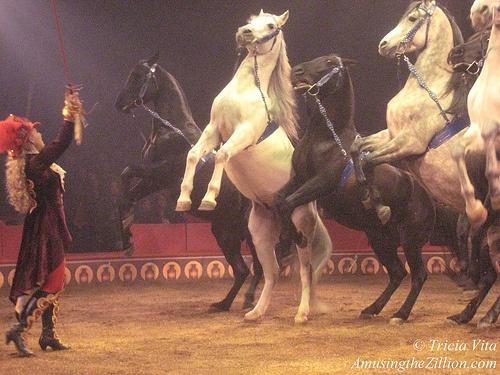 Circus Liberty Horse Act | {circus} An Elephant Healed Me ...